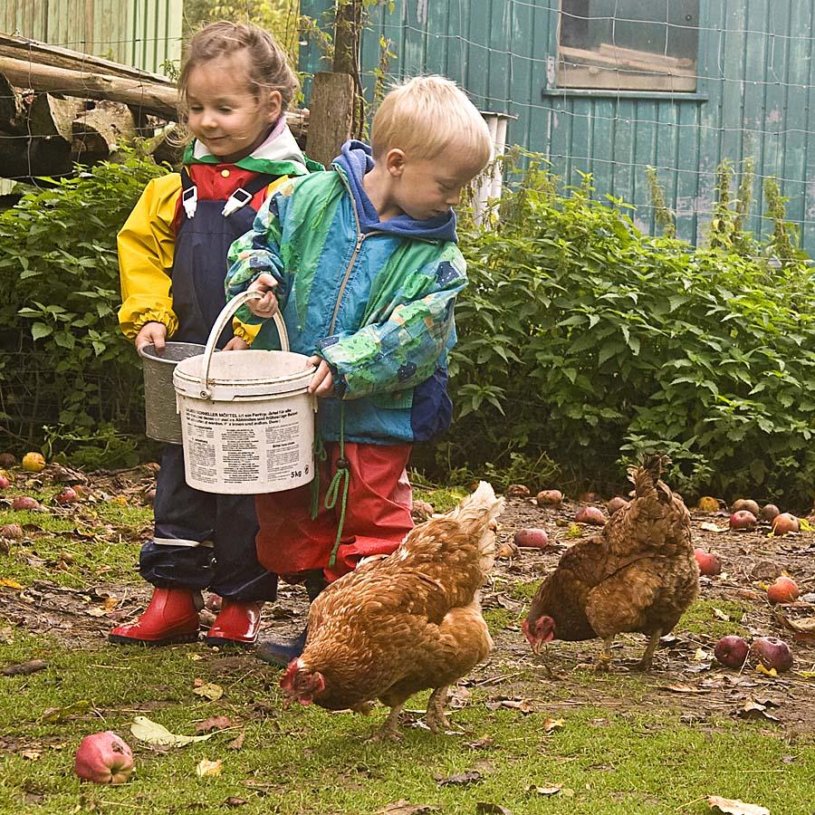 Die Kinder dürfen die Tiere füttern - Alltag in einem Bauerhofkindergarten (Foto: Kita Natura eG)