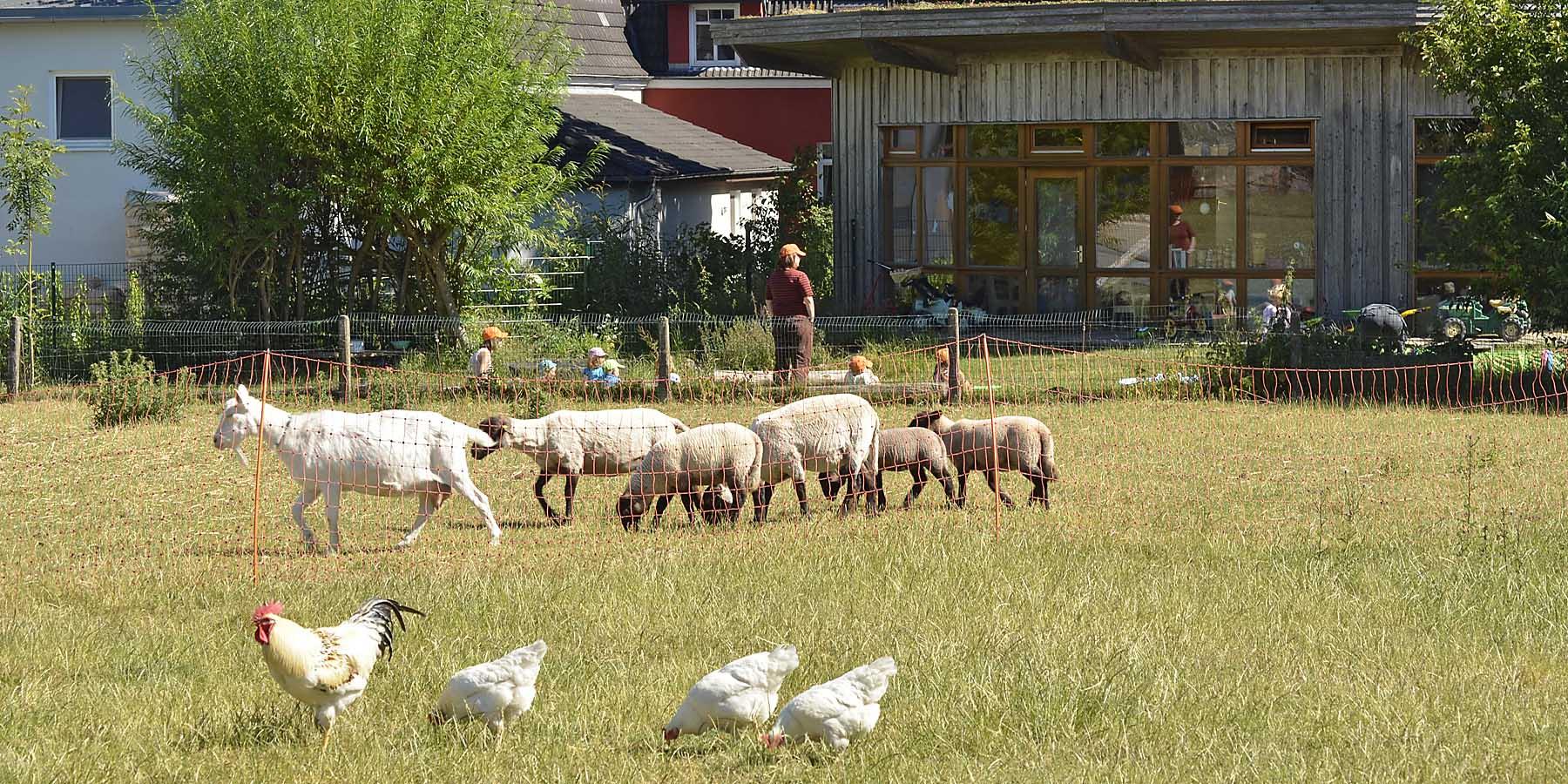 Bauernhofkindergarten am Biohof Muhs, Krummbek