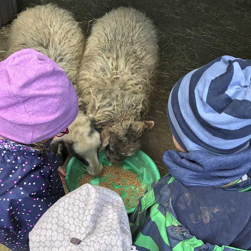 Begegnung und Umgang mit Tieren