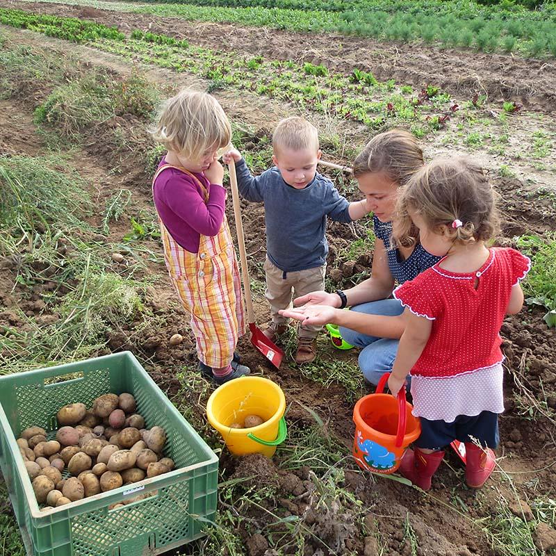 Kartoffelernte mit den Gartenkindern, Hofkindergarten von Kita NATURA in Binzen